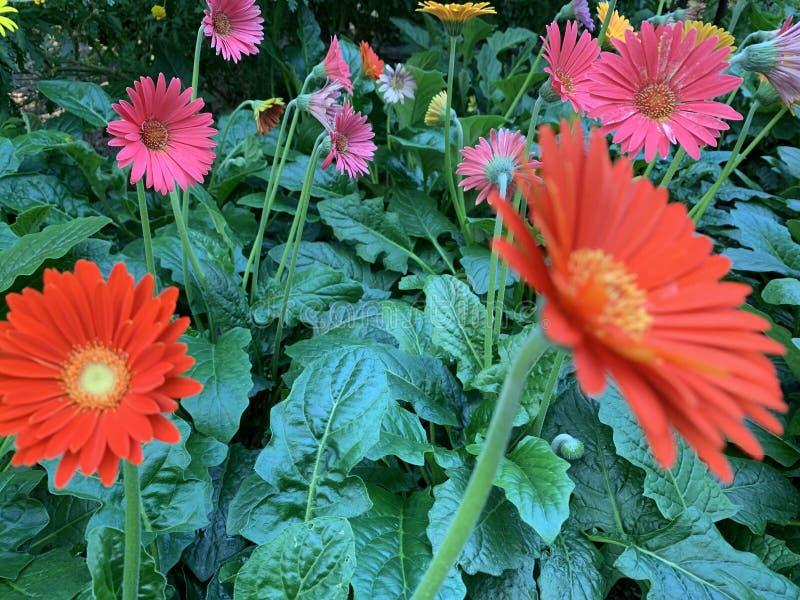 彩虹花在花床上 免版税图库摄影