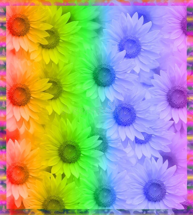 彩虹雏菊框架 皇族释放例证