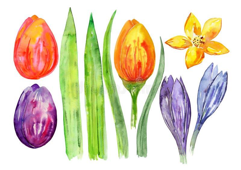 水彩装饰花、郁金香和叶子,水彩春天纹理,复活节花题材集合 向量例证