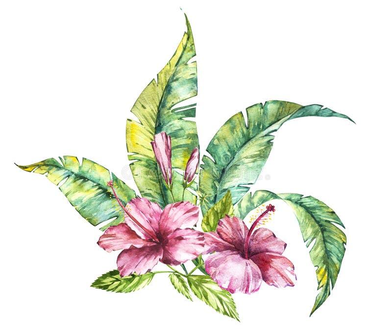 水彩隔绝了一棵桃红色木槿和叶子,在白色背景的热带花构成的例证 向量例证