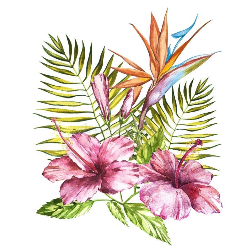 水彩隔绝了一棵桃红色木槿和叶子,鹤望兰reginae,在a的热带花构成的例证 向量例证