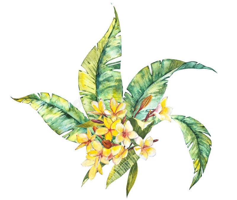 水彩隔绝了羽毛和叶子,在白色背景的热带花构成的例证 皇族释放例证
