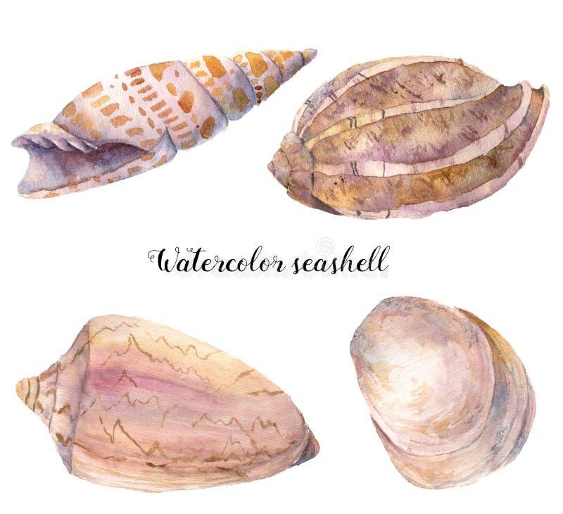水彩贝壳集合 在白色背景隔绝的手画水下的热带动物例证 对设计 向量例证