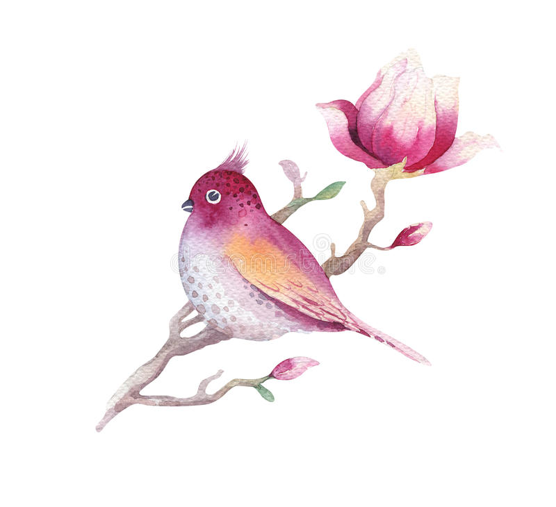 水彩绘画木兰开花花和鸟贴墙纸d 向量例证