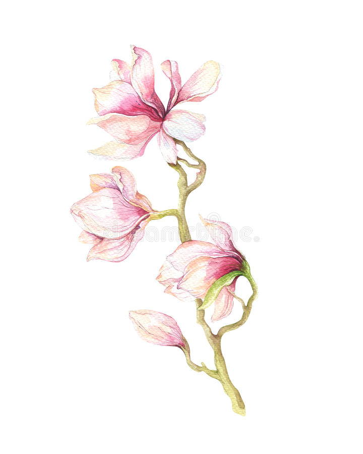 水彩绘画木兰开花花墙纸装饰 库存例证