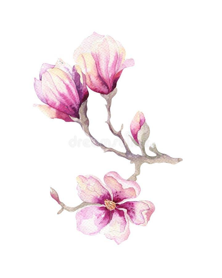 水彩绘画木兰开花花墙纸装饰 皇族释放例证