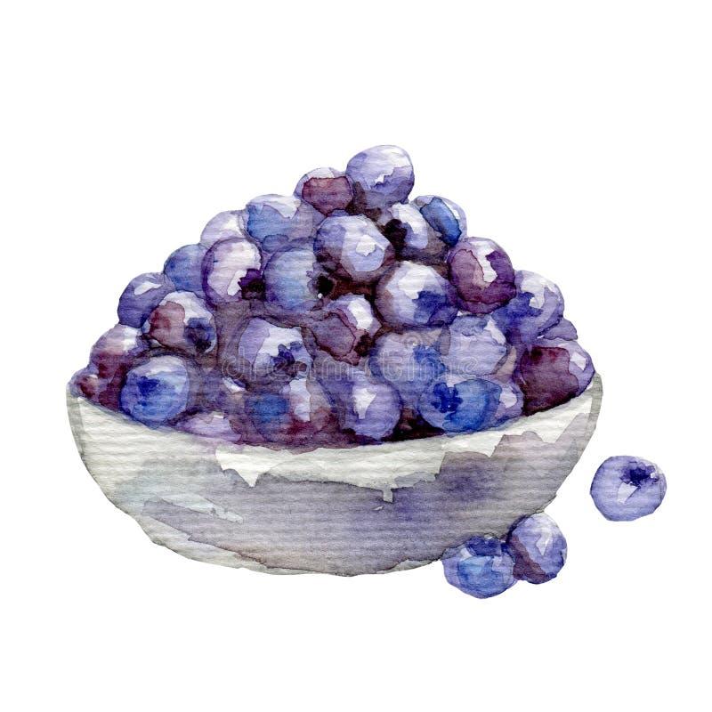 水彩 莓果蓝莓 手拉在白色 向量例证