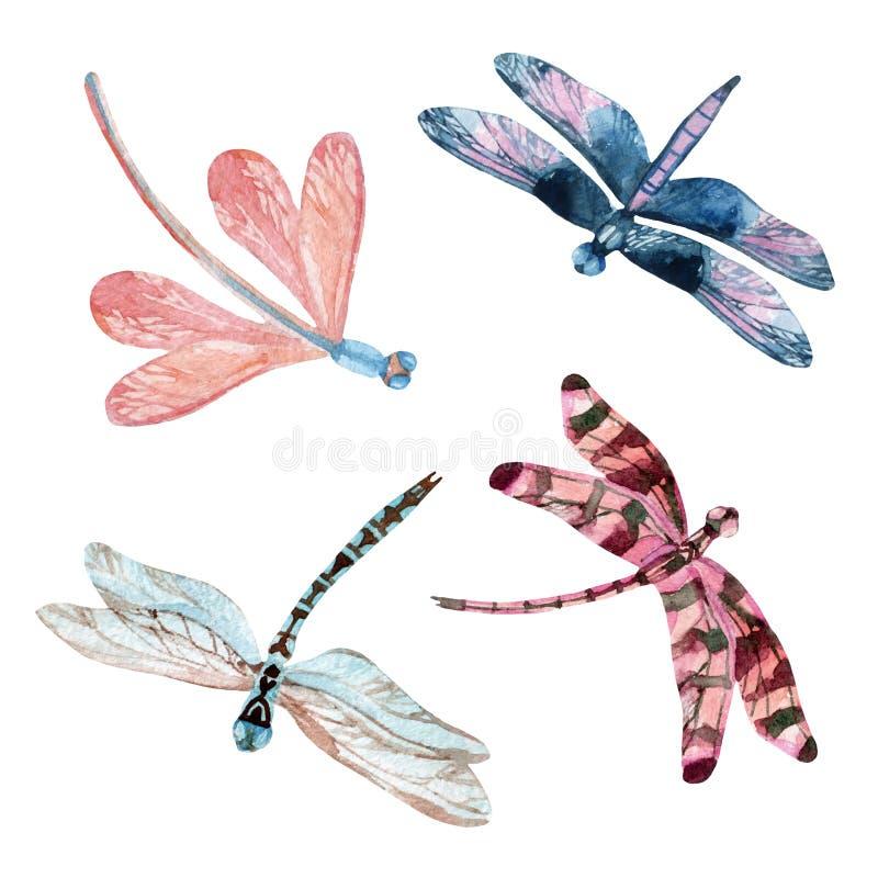 水彩蜻蜓集合 皇族释放例证