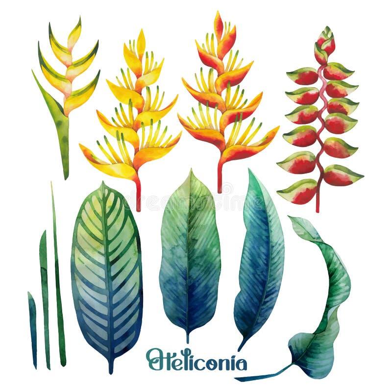 水彩heliconia汇集 库存例证