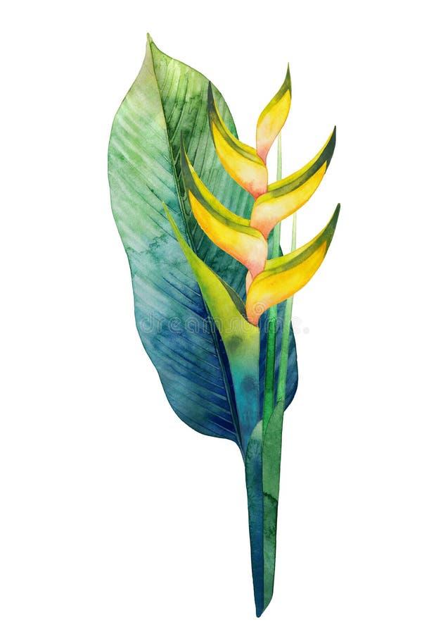水彩heliconia花束 库存例证
