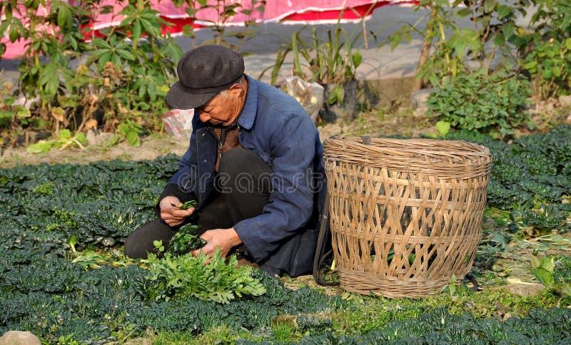 彭州,中国:有柳条筐的年长农夫 免版税库存图片