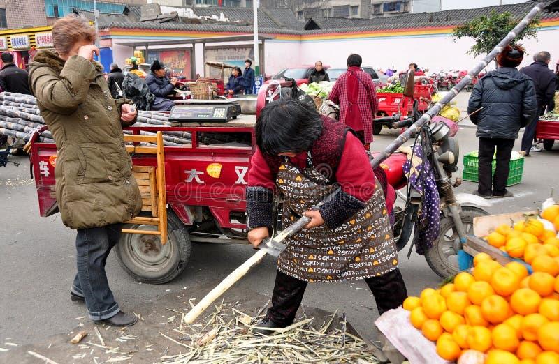 彭州,中国: 妇女剪切甘蔗 库存图片