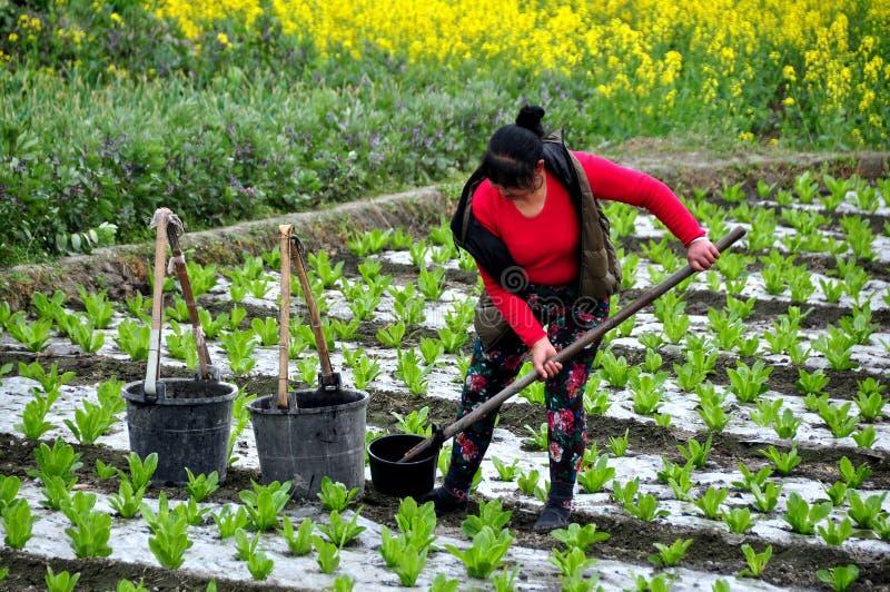 彭州,中国: 妇女浇灌的幼木 免版税库存图片