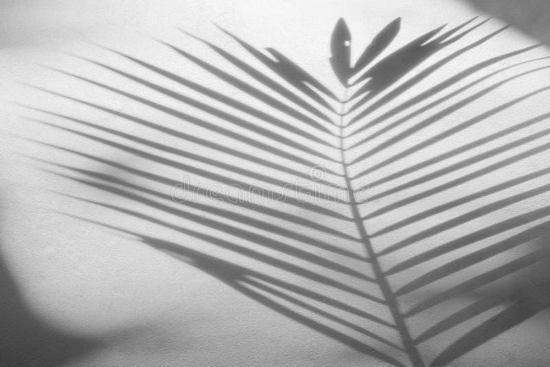 阴影棕榈叶抽象背景在水泥粗砺的纹理墙壁上的 库存照片
