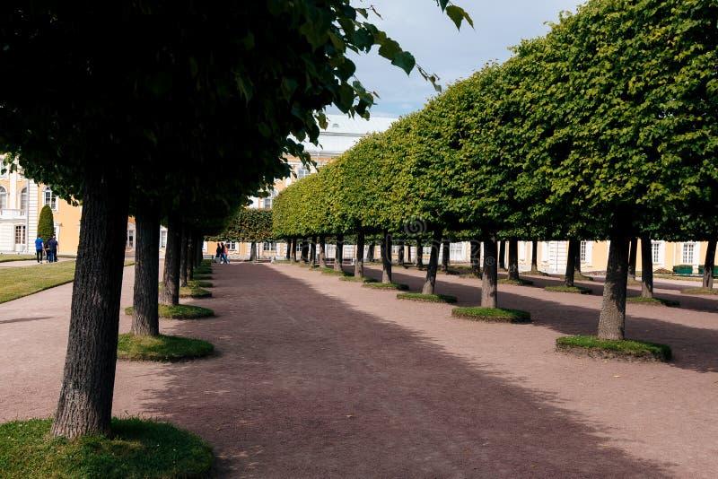 彼得照片1个宫殿在Peterhof在夏天 库存照片