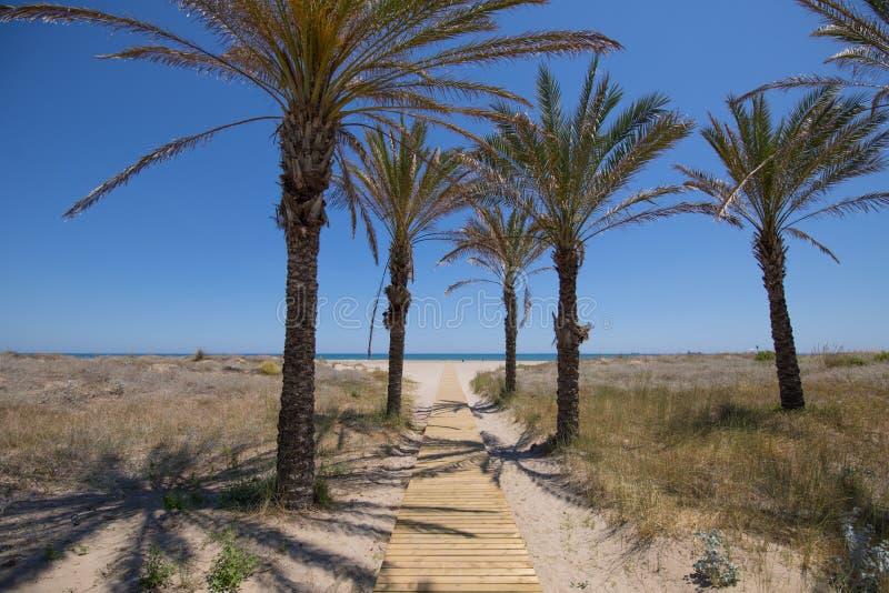 往杉木海滩的木走道在Grao 免版税库存照片