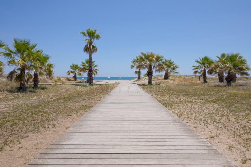 往棕榈树和海滩的木走道 免版税库存图片