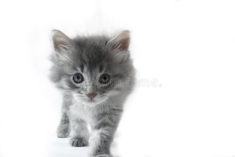 往走的照相机猫 库存照片