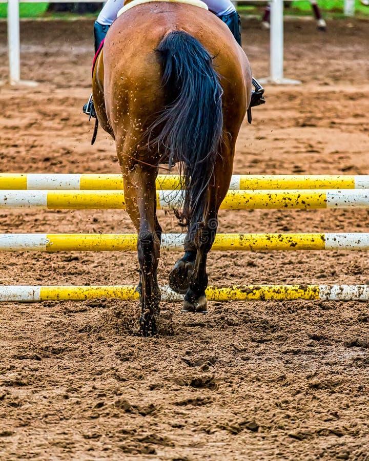 往障碍的马赛跑在看的骑马种族后边 库存照片