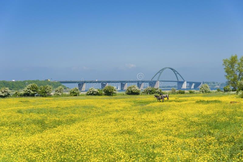 往Fehmarnsund桥梁的看法 免版税库存照片