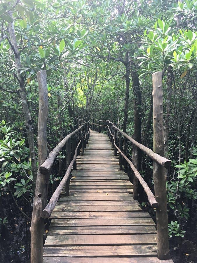 往Jozani森林美洲红树的桥梁 免版税库存照片