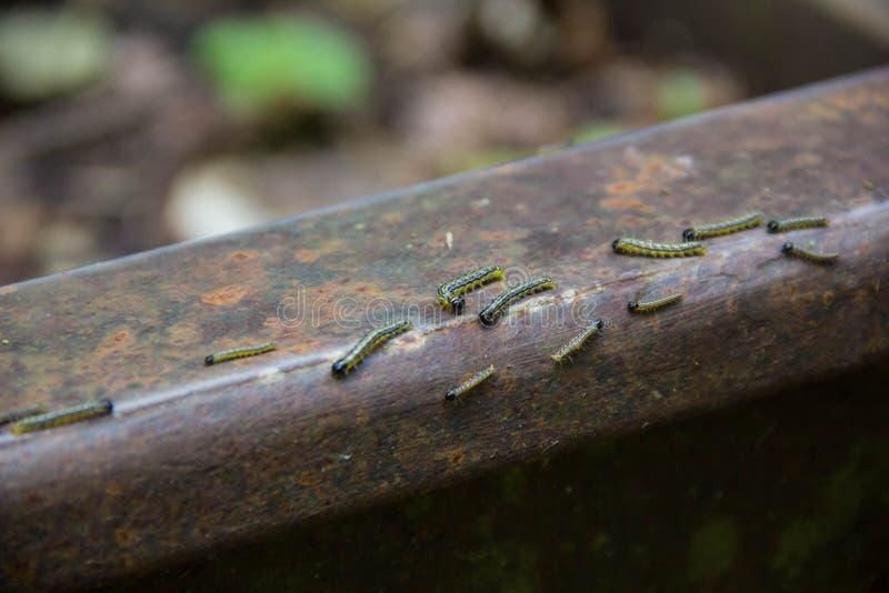 很多小的黑毛虫boxen在窄片铁路路轨的生火  环境灾害在Mezmay 图库摄影