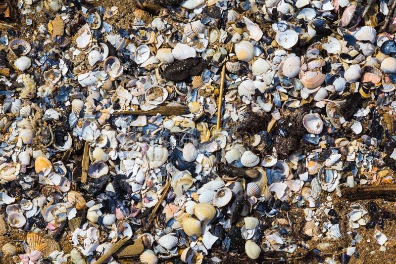 很多残破的壳破坏了波罗的海shor 免版税库存照片