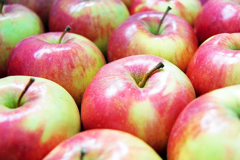 很多红绿的苹果 免版税库存照片