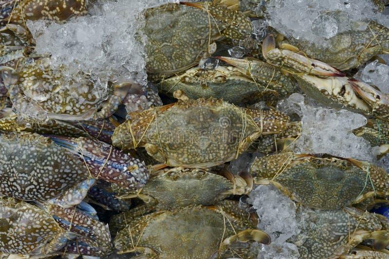 很多花螃蟹,青蟹,蓝色游泳者螃蟹,蓝色精神食粮螃蟹,对卖的沙子螃蟹在市场上 免版税图库摄影