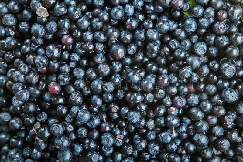 很多蓝莓 背景浆果鼠李关闭海运 免版税库存图片