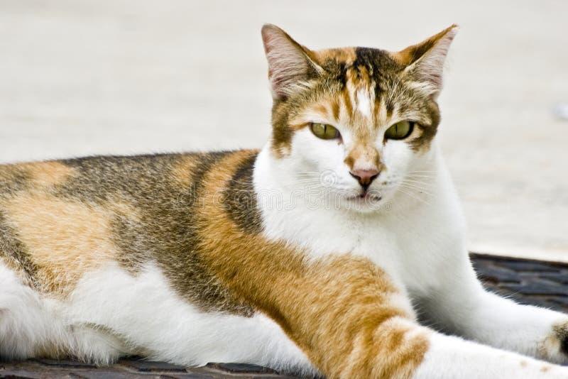 很好正常运行猫 库存照片