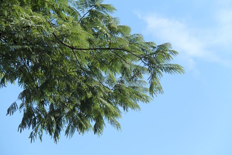 很美丽的树和天空,版本4 免版税图库摄影