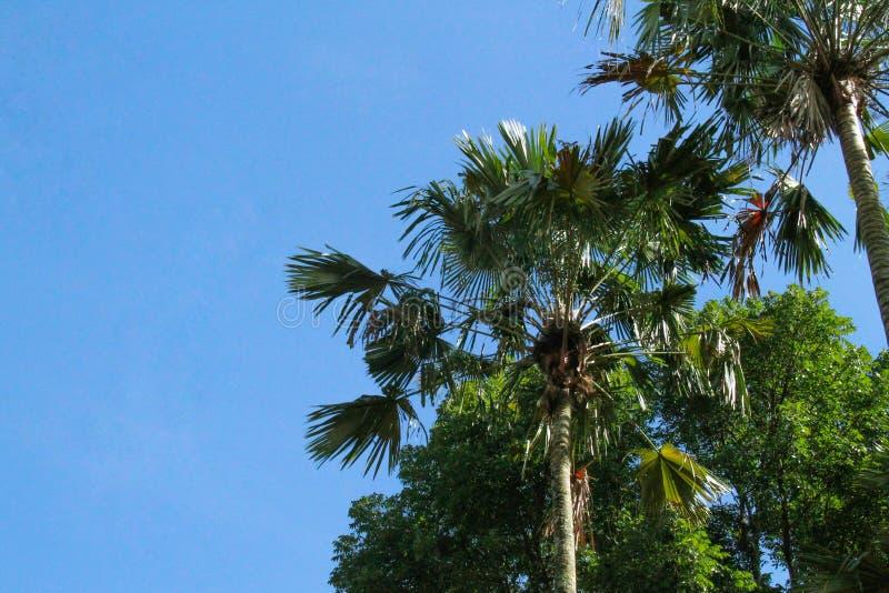 很美丽的树和天空,版本6 免版税库存照片