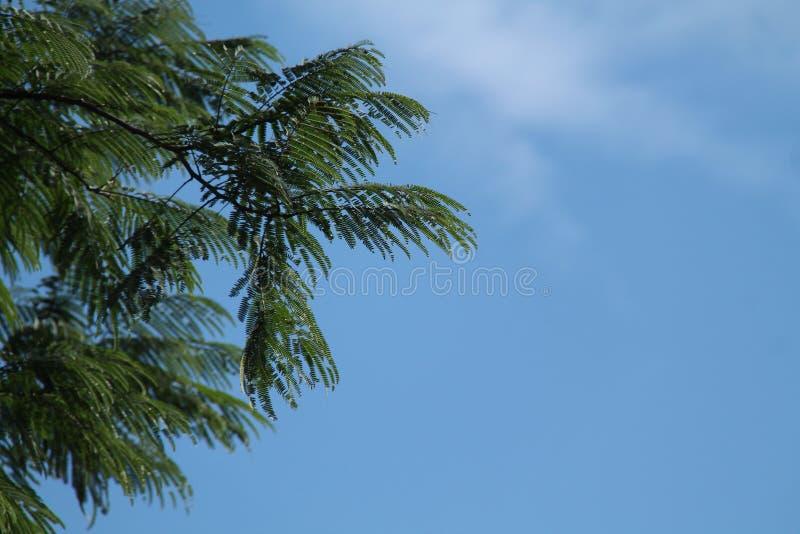 很美丽的树和天空,版本10 免版税库存图片