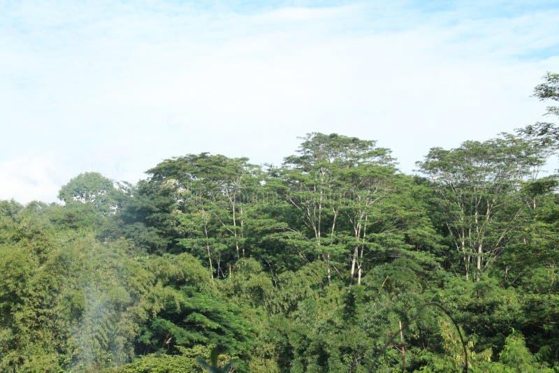很美丽的树和天空,版本12 免版税库存照片