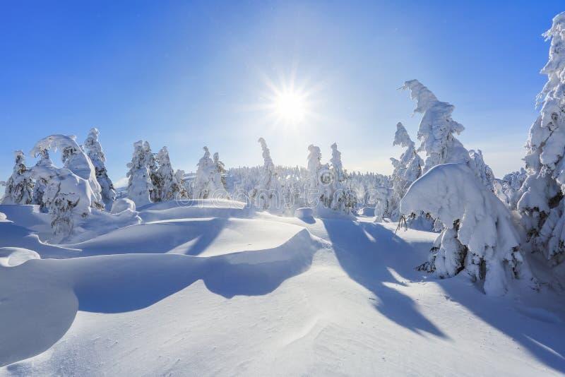 很远在用白雪盖的高山站立在不可思议的雪花的少量绿色树在领域中在一个冬天 库存照片