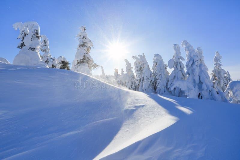 很远在用白雪盖的高山站立在不可思议的雪花的少量绿色树在领域中在一个冬天 免版税库存照片