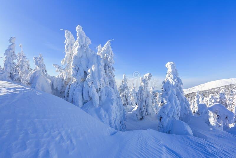 很远在用白雪盖的高山站立在不可思议的雪花的少量绿色树在领域中在一个冬天 库存图片