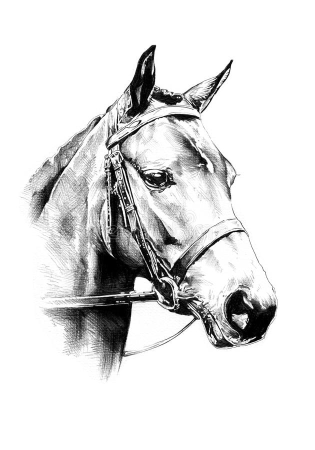 徒手画的马头铅笔图 库存图片