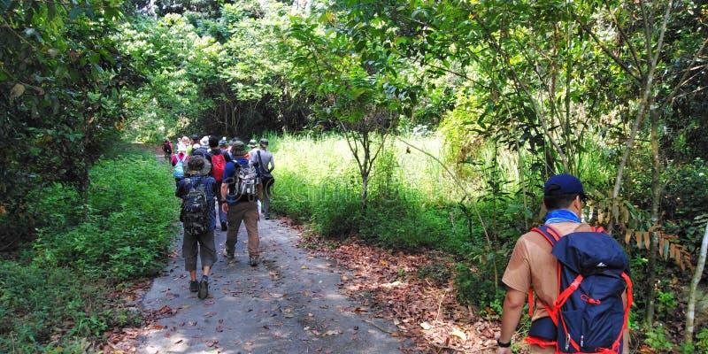 徒步旅行者在Tengah森林里 免版税库存图片