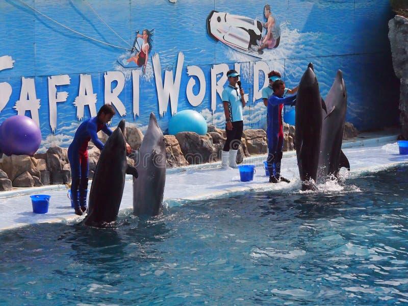 徒步旅行队世界动物园 库存图片