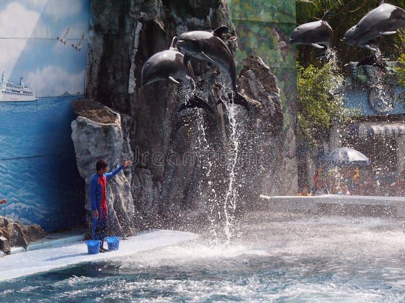 徒步旅行队世界动物园 免版税库存照片