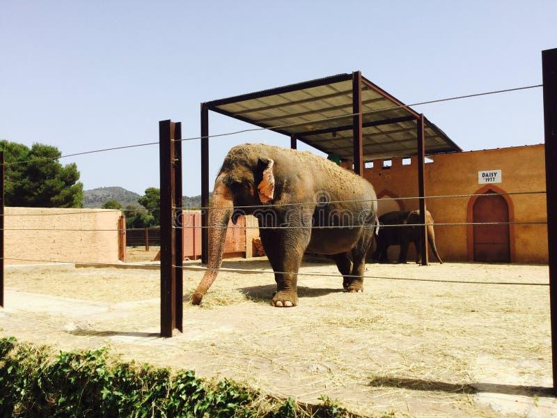 徒步旅行队动物园 免版税图库摄影