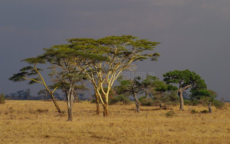 徒步旅行队在塞伦盖蒂国家公园,坦桑尼亚,非洲 美好的非洲风景日落 宽大草原和美丽的平原 免版税库存图片