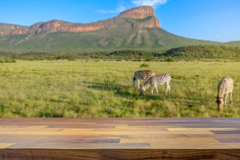 徒步旅行队在有在背景中弄脏的斑马的南非 库存图片