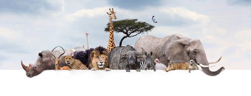 徒步旅行队在网横幅的动物园动物 图库摄影