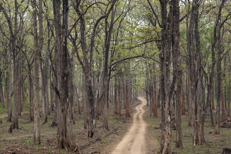 徒步旅行队在Kabini野生生物保护区,卡纳塔克邦,印度的森林足迹 免版税库存图片