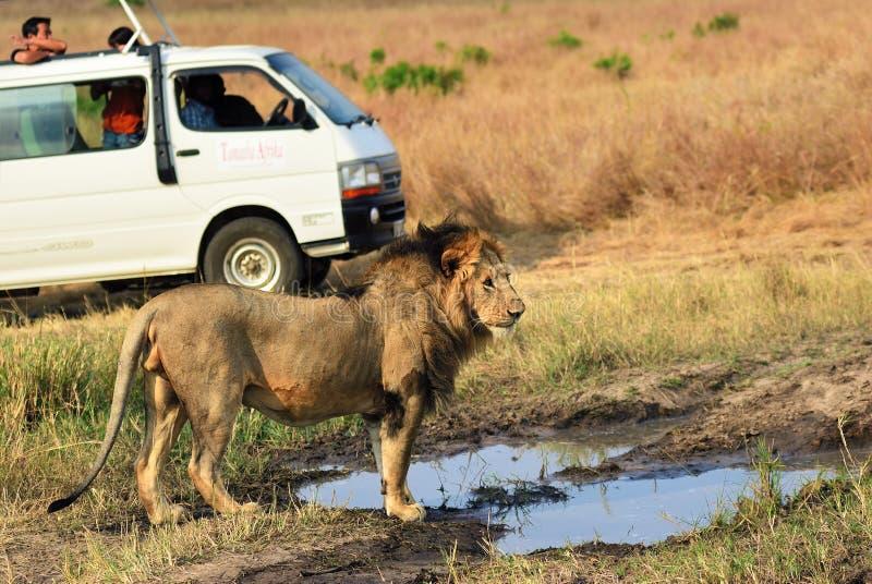 徒步旅行队马塞语玛拉,肯尼亚,非洲 免版税库存图片