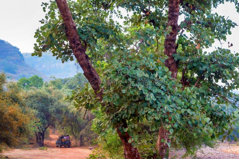 徒步旅行队驱动在Ranthambore国家公园,印度 库存图片