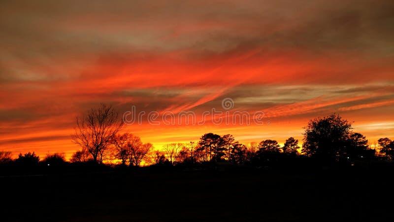 得克萨斯日落树剪影 美好的红色天空夏天 库存图片